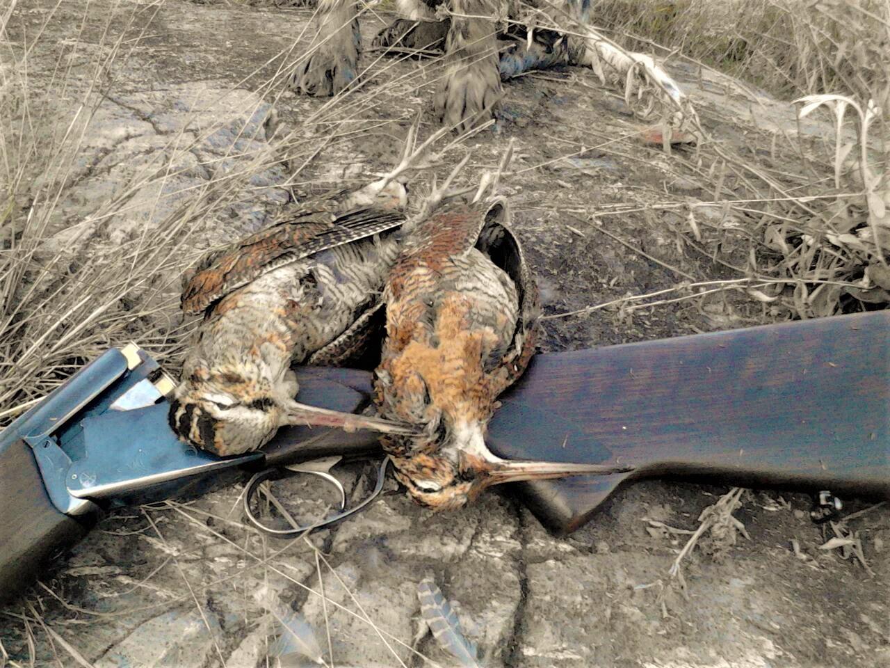 Beccacce Hunting In Macedonia Caccia In Macedonia